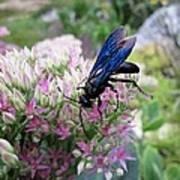 Wasp On Sedum Art Print
