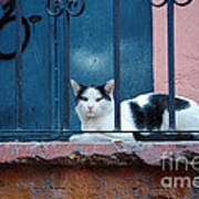 Watchful Cat, Mexico Art Print