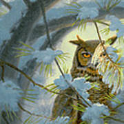 Watchful Eye-owl Art Print by Paul Krapf
