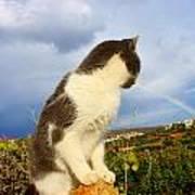 Watching The Rainbow Art Print