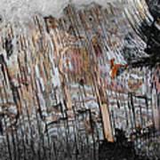 Water And Birch Art Print