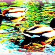 So Water Dance Is For Dancing Ducks  Art Print