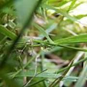 Water Droplet On Grass Blade Art Print
