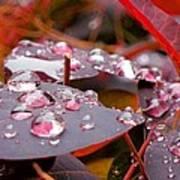 Water Drops After The Rain Art Print