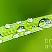 Water Drops On Grass Blade Art Print by Elena Elisseeva