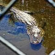 Water Hole Gator Art Print