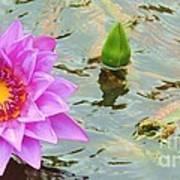 Water Lilies 001 Art Print
