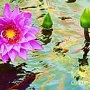 Water Lilies 002 Art Print