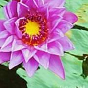 Water Lilies 003 Art Print