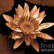 Water Lilies 012 Art Print