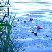 Water Lilies Blue Art Print