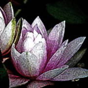Water Lilies I Art Print