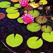 Water Lilies With Pink Flowers - Vertical Art Print