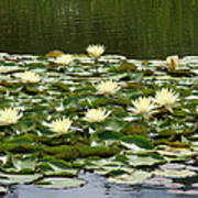 Water Lillies Art Print