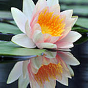 water lily 45 Water Lily with Reflection Art Print