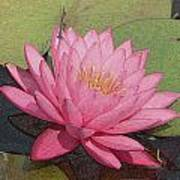 Water Lily And Guest Art Print