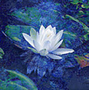 Water Lily Art Print by Ann Powell