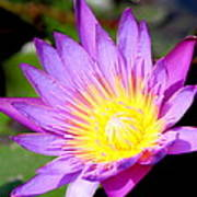 Water Lily In Purple Art Print