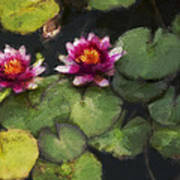 Water Lily Neo Art Print