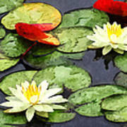 Water Lily Pond In Autumn Art Print