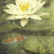 Water Lily Print by Scott Norris