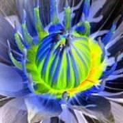 Water Lily - The Awakening - Photopower 03 Art Print