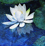 Water Lily Two Art Print by Ann Powell