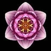 Water Lily X Flower Mandala Art Print