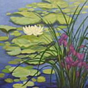 Water Lotus Art Print