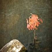 Water Maple Art Print by Michelle Calkins
