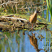Water Rail Reflection Art Print