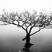 Water Tree Art Print