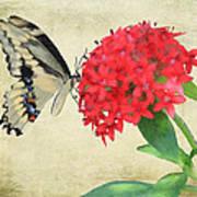 Watercolor Butterfly Art Print