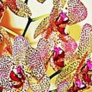 Watercolor Orchid Shadows Art Print
