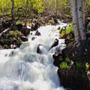 Waterfall By The Aspens Art Print