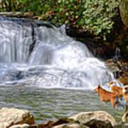 Waterfall Dogs Art Print by Bob Jackson