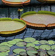 Waterlilies And Platters 2 Art Print by Byron Varvarigos