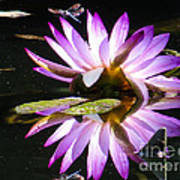 Waterlily And Dragonfly Art Print