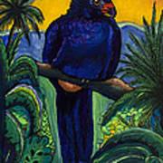 Wattled Carassow Art Print