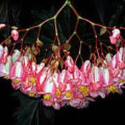 Wax Begonia Art Print