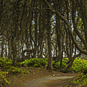 We Follow The Path II Art Print by Jon Glaser