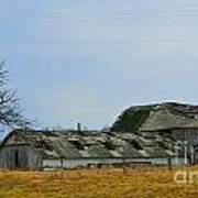 Weathered Barns Art Print by Alys Caviness-Gober