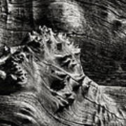 Weathered Wood Art Print