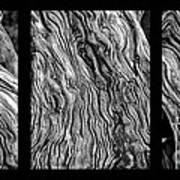 Weathered Wood Triptych Bw Art Print
