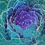 Webbed Succulent In Teal Tones Art Print