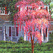 Weeping Cherry By The Veranda Art Print