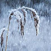Weight Of Winter Art Print