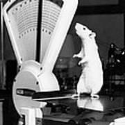 Weight Watcher Lab Rat Art Print