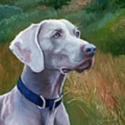 Weimaraner Dog Art Print