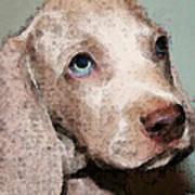 Weimaraner Dog Art - Forgive Me Art Print by Sharon Cummings